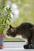 kat zittend op het raam