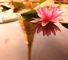 Thailand bangkok wat phra kaew lotusbloem foto