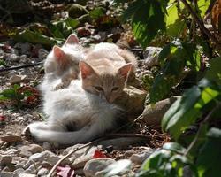 kittens die van zonneschijn genieten foto