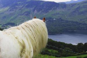 wild paard genieten van het uitzicht foto