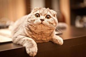 schattige kat genieten van zijn leven