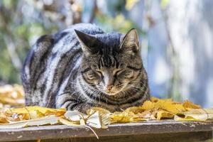 kat geniet van het warme licht in de herfst foto