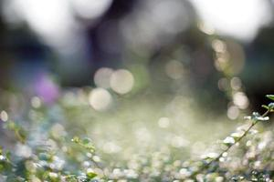 bokeh blad met zonlicht foto