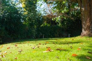herfst tuin scene foto