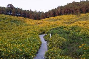 kleurrijke bloem foto