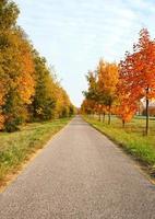fietsweg leidt door de herfst bomen foto