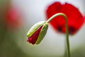 bloem achtergrond