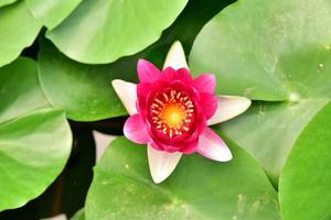 bloemen bloeien