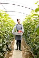 landbouw in de voorsteden foto