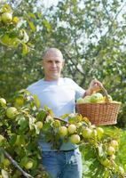 man in appelboomgaard foto