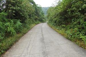 betonweg in het bos foto
