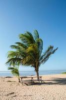 tropisch strand foto