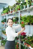 vrouw kiest guzmania bij winkel foto