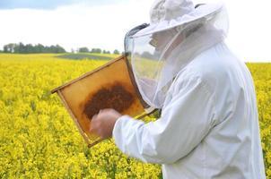 ervaren senior apiarist werkzaam in het bloeiende koolzaadveld foto