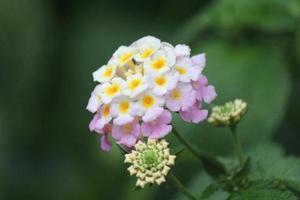 bloemen bos foto