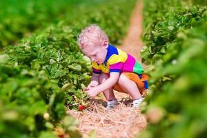 lief kind plukken verse aardbeien op een boerderij foto