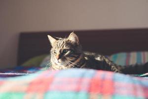 kat op het bed thuis foto