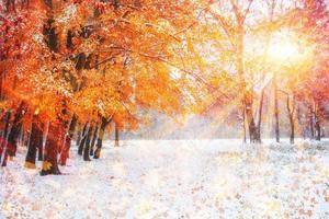 zonlicht door de bomen in de eerste winterdagen foto