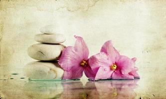 vintage foto van kuuroordstenen en roze bloem