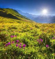 bloeiende roze bloemen in de Kaukasische bergen. foto