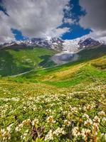 bloeiende rododendrons in de Kaukasische bergen. foto