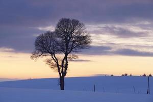 boom in een winterlandschap bij zonsondergang
