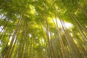bamboebos, Kyoto, Japan