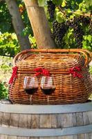picknick in de wijngaard foto