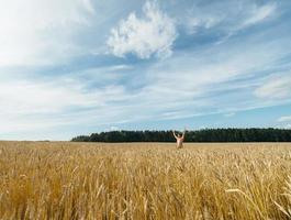 man in een tarweveld foto