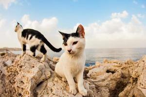 katten op straat foto