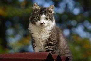 leuk katje zittend op een dak foto