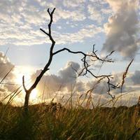 zonsondergang achter een boom foto