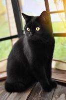zwarte kat op een zomer veranda foto