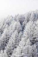 bos in de sneeuw foto