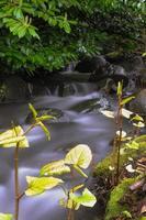 lente bladeren en stream foto