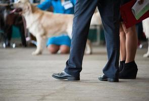 keurmeesters op een hondenshow foto