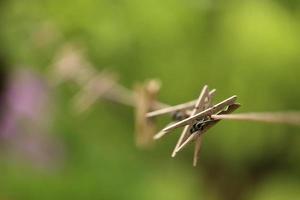 haringen aan het koord foto