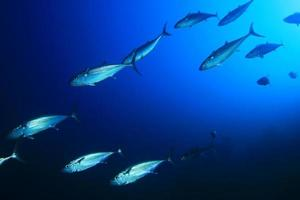 tonijn foto