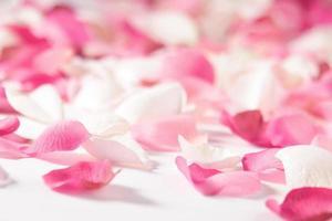 roze rozenblaadjes (zijde) foto