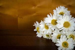 witte chrysant foto