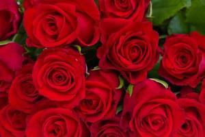 boeket rode rozen foto