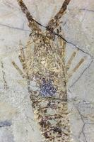 fossiel foto