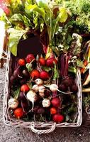 veelkleurige bieten op boerenmarkt foto