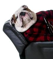 drinkende hond foto