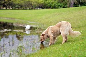 hond drinkwater foto