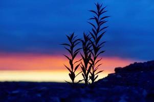 surrealistische schemering kleurrijke, dramatische kleurrijke zonsondergang terug verlicht gras foto