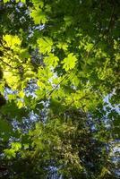 zonnig verlichte bladeren