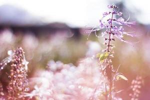 verlichte paarse kumis kucing foto