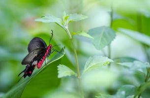 prachtige vlinder in een vlinderboerderij foto