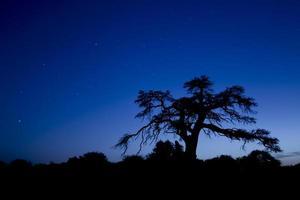 boomsilhouet met blauwe hemel foto